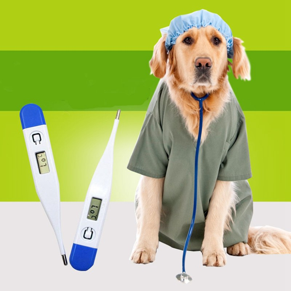 Accurate Pet Dog Digital Thermometer Portable Dog Electronic The