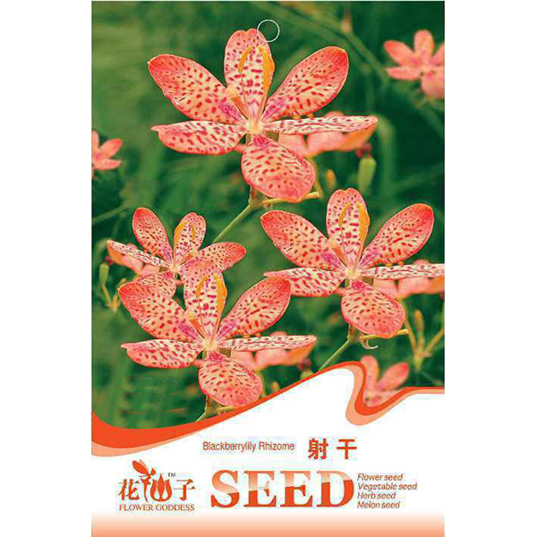 10 Seed Belamcanda Blackberry Lily Seeds