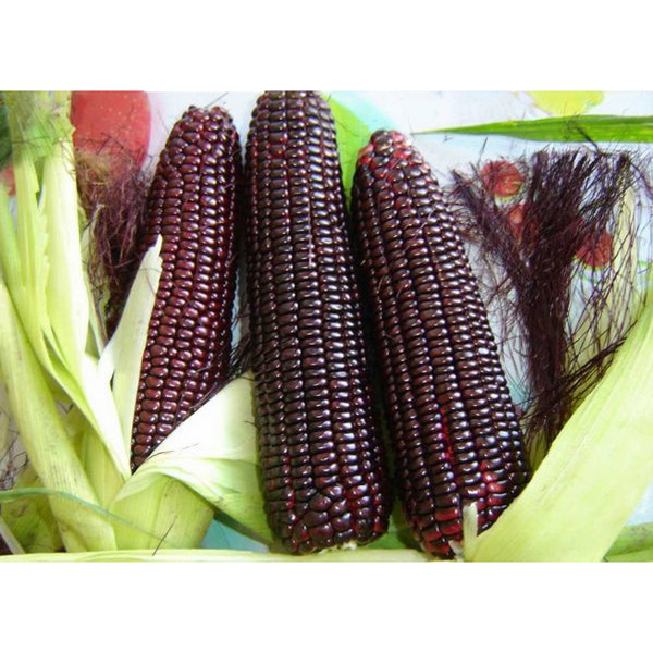 10 PCS Red Waxy Corn Seeds Novelty Vegetable Seed