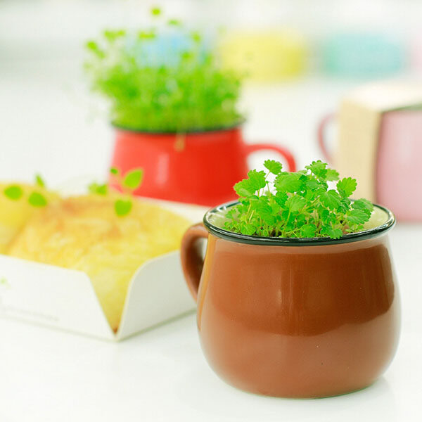 Ceramics DIY Mini Coffee Cup Potted Plant Office Desktop Plant D