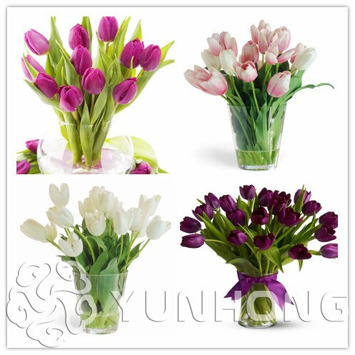(10 pieces/pack) Tulip seeds,Tulipa gesneriana,potted plants, pl
