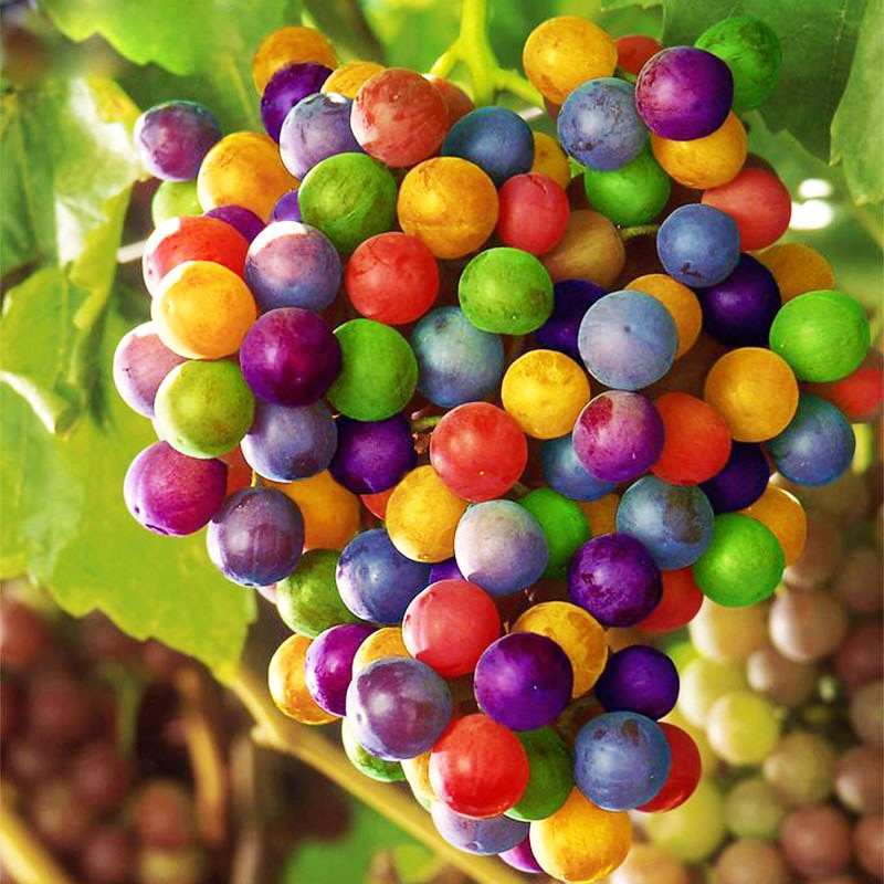 Imported Beauty Rainbow Grape Seeds Advanced Fruit Seeds Natural